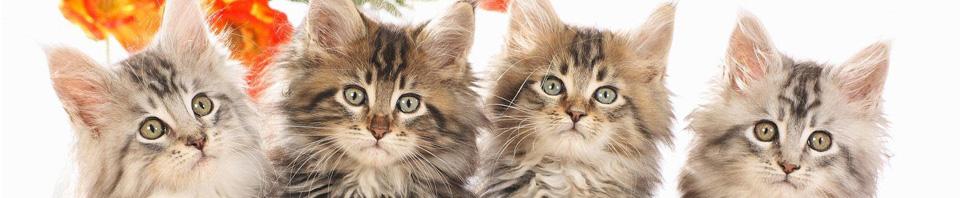 Blogg om katter
